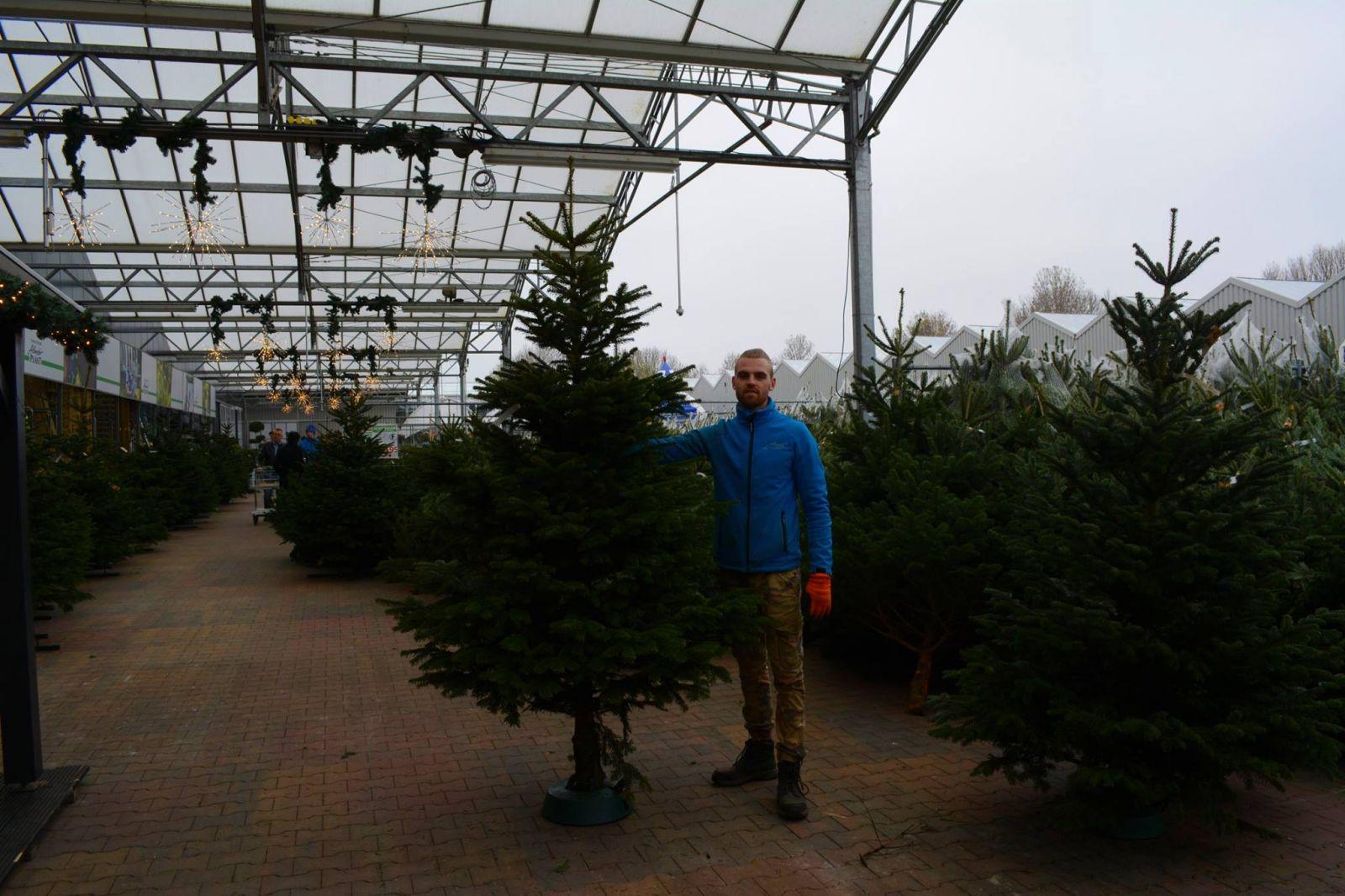 Kerstbomen-almeerplant