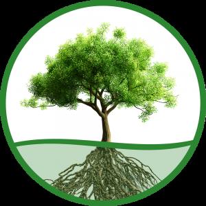 Logo tuincentrum Olijfje het Groene Hart