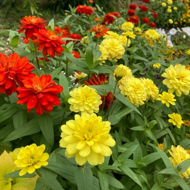 Buy your annuals from Garden Factory in Rochester