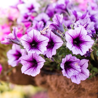Looking for annuals in Rochester, New York? Go to Garden Factory