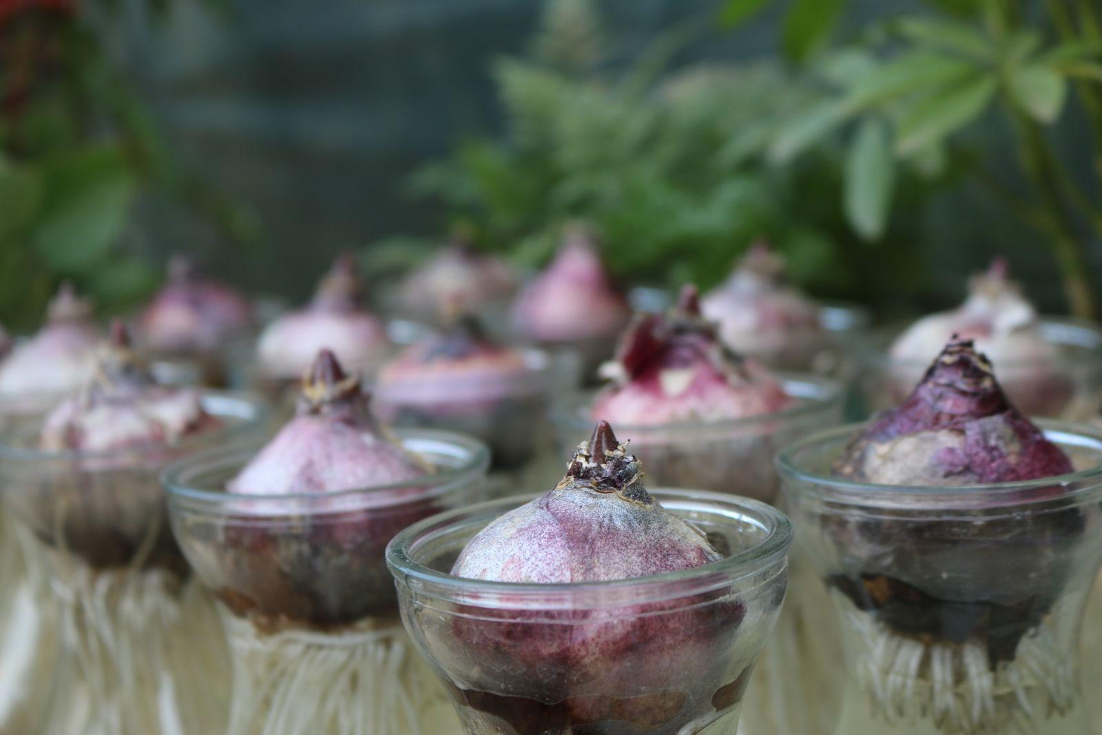 planten-in-glazen-potjes